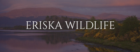 Eriska Wildlife